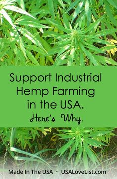 Did you know this is Hemp History Week? Find out why you need to know more about industrial hemp farming. And we found some Made in USA hemp products too. Hemp Recipe, Living Off The Land, Hemp Seeds, Farm Gardens, Medicinal Herbs, Hemp Oil, Cannabis, Medical Marijuana, Agriculture