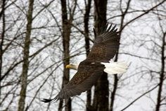 Flying high | Readers Lens | The Seattle Times