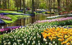 Keukenhof - Los tulipanes - Holland.com