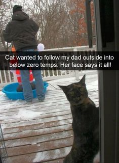 Cat wanted to follow my dad outside into below zero temps. Her face says it all!