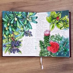 Flowers & succulents sketch by instagram.com/cattalema/. Love the deep colours created with Copic Markers