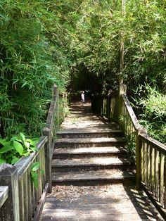 Jefferson Island--bamboo trail