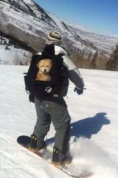 Dog goes snowboarding. Can't wait to get to the bottom for my organic gluten-free doggie treat! Www.boneyardbakery.net