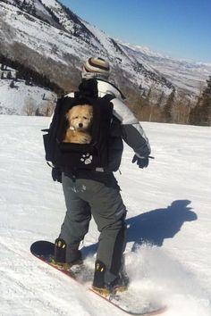 Dog goes snowboarding. So?