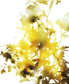 James Welling, Photograms, Flower 21, 2006contemporary-art-blog