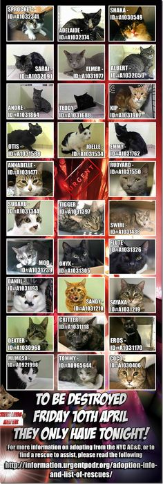 IS YOUR PET MISSING ?  URGENT ! SHARE PLEASE .. 29 CATS on DEATH ROW TONIGHT : http://nyccats.urgentpodr.org/category/su-cats/
