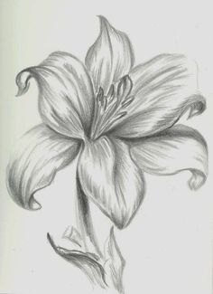 The best Pencil drawings ideas Easy Flower Drawings, Pencil Drawings Of Flowers, Pencil Shading, Flower Sketches, Pencil Art Drawings, Drawing Sketches, Cool Drawings, Drawing Flowers, Flower Sketch Pencil