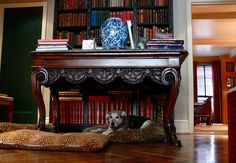 Bunny Williams ~ Home for Bunny's  dogs is under an Italian Neo-classical table in the front hall.