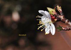 ...kvetení Flowers, Plants, Florals, Planters, Flower, Blossoms, Plant, Planting