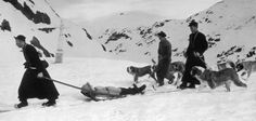 Monks and a team of St. Bernard's rescue a lost traveler in the Swiss Alps, circa 1955 St Bernard Rescue, St Bernard Dogs, The Fox And The Hound, Dog Travel, Mountain Dogs, Large Dogs, Mans Best Friend, Rescue Dogs, A Team