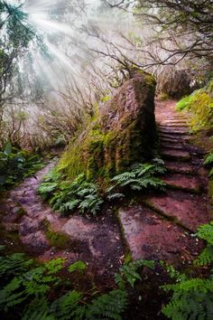 Aurissilva Forest (UNESCO World Heritage) path in Madeira, Portugal. An outstanding relict of a previously widespread laurel forest type. It is the largest surviving area of laurel forest & is believed to be primary forest. - photo via Around the World Foto Nature, All Nature, Beautiful World, Beautiful Places, Beautiful Pictures, Beautiful Forest, Magical Forest, Romantic Places, Amazing Places