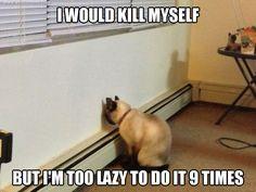 Depressed cat vol.2 ~ MeLolz - Just For Fun, Funny Memes Jokes, Troll Pics