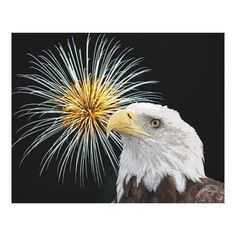 Customizable #American #Animal #Aviary #Bald#Eagle #Beak #Bird #Birds #Birds#Of#Prey #Carrion #Celebration #Debbie#Quick #Debs#Creative#Images #Eagle #Eyes #Feathers #Fireworks #Fourth#Of#July #Independence#Day #Large #Majestic #New#York #Outdoor #Patriotic #Portrait #Power #Predatory #Prey #Pride #Raptor #Sky #Strength #Symbolic #Talons #The#Hudson#Valley #Wild #Wildlife #Wings Bald Eagle and Fireworks Canvas Print available WorldWide on http://bit.ly/2iGFSok