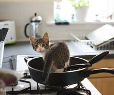 Kittens in the Kitchen! A Cuteness Break for Your Post-Holiday Tuesday Morning Cute Kittens, Cats And Kittens, Crazy Cat Lady, Crazy Cats, I Love Cats, Cool Cats, Here Kitty Kitty, Bad Kitty, Kitty Cats