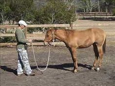 Clicker training for horses. I will definitely be using this!