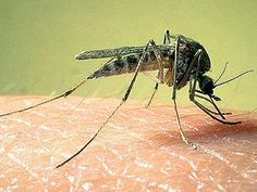 Researchers at the Centers for Disease Control and Prevention are working on a new all-natural insect repellent. It not only keeps bugs away — it kills them in seconds.