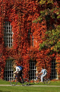 in autumn the Boston Ivy turns Green Living Walls/Vertical Garden Dartmouth College, Dartmouth University, Boston Ivy, College Aesthetic, College Campus, Ivy League, New Hampshire, New England, Beautiful Places