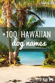 Need a name for your new pup? Try one of these 100 Hawaiian dog name ideas with some island naming inspiration for your pooch! Hawaiian Names And Meanings, Hawaiian Dog Names, French Bulldog Names Girl, French Dog Names, Boy Puppy Names, Pet Names For Dogs, Boy Dog Names Unique, Cute Names, Unique Names