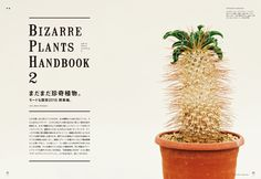 信じられない形状の茎だったり、 見たことのない模様の葉を持っていたり。 コレクターの心をくすぐって止まない 珍奇植物(ビザールプランツ)を探して、 日本国内のみならずドイツまで ...