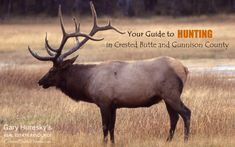 Hunting in Crested Butte and Gunnison County | Crested Butte Real Estate
