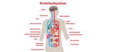 Der neurogene Schock bei Querschnittlähmung | Der-Querschnitt.de