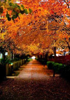 Vancouver In Autumn Season