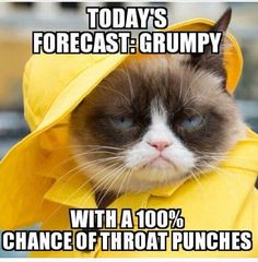 Grumpy Cat - ''Today's Forecast - Grumpy with a chance of throat punches.'' (The Official Grumpy Cat) Grumpy Cat Quotes, Funny Grumpy Cat Memes, Funny Animal Memes, Funny Animal Pictures, Funny Cats, Funny Animals, Funny Memes, Hilarious, Grumpy Cats