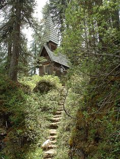 cottage in the woods...