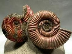 spiral pictures in nature - Google Search