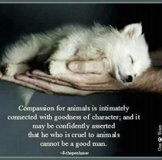 I have an extreme passion to help and love animals.