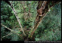 West Papua, Indonesia People Around The World, Around The Worlds, Papua Nova Guiné, Steinmetz, Destinations, West Papua, Tree People, In The Tree, Papua New Guinea