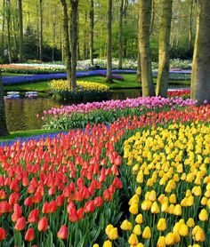 Advertisement: Top 10 Most Beautiful Gardens Around The World Looking for a next spot for your vacation? These beautiful gardens Most Beautiful Gardens, Amazing Gardens, Beautiful Flowers, Beautiful Places, Amazing Places, Exotic Flowers, Purple Flowers, Tulips Garden, Garden Bulbs