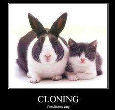 #cat #bunny #humor