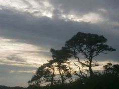 My photo .. Tree life..