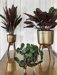 Brushed Brass & Mango Wood Plant Stands – Homeplace