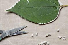 Leaf Cutting Detail