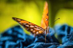 Mariposa.jpg by Rodrigo Godinez on 500px