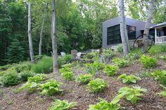 Harmonious: Rustic de Rigueur Moss Garden, Landscape Design, Grass, Rustic, Architecture, Modern, Plants, Projects, Log Projects