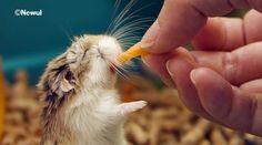 hamster !!!