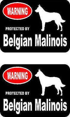belgian malinois - Google Search