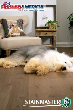 Stainmaster Pet Protect luxury vinyl is the perfect way to create a safe and comfortable floor for you, your family and your pet.  Stainmaster Pet Protect luxury vinyl #flooring features: Pet ClawShield™ Pet ActionTraction™ 100 percent waterproof Resists odors from pet accidents