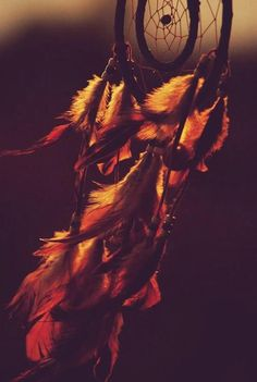 the feathers look like they're on fire
