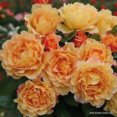 Mr, Flowers •.¸♥♥¸.• - Community - Google+