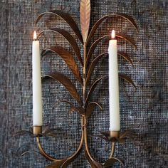 Brass Foliage Wall Sconce in House + Home Lighting + Candleholders at Terrain