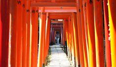 NEW✔ Nezu Jinja Shrine - Tokyo ● 根津神社 東京
