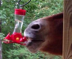 Does anyone know what kind of hummingbird this is? - Click the PIN to see more!