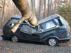 VW Bus smashed by tree