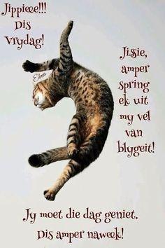 Goeie Nag, Goeie More, Afrikaans Quotes, Friday Humor, Emoticon, Good Morning, Van, Movies, Cards