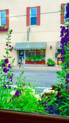 A ParadeOfGardens.com exclusive photo: Business appeal using the power and colors of flowers to achieve it as highlighted from within an across street window box filled with flowers.