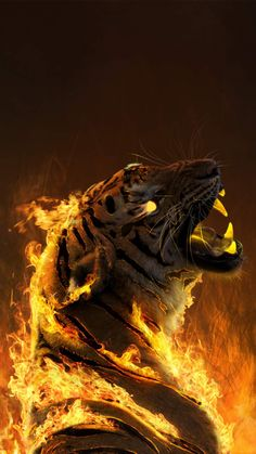 Burning Tiger iPhone Wallpaper - iPhone Wallpapers